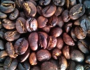 luwak coffee alias kopi arabica bengkulu